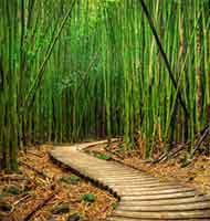 El bamb chino y el cultivo de la virtud - Cultivo del bambu ...