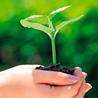 Las principales iglesias cristianas se unen en oración  y acción contra la crisis ecológica