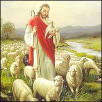 Mis ovejas escuchan mi voz