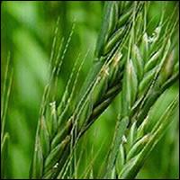 Qué fácil es ver la cizaña y olvidarse del trigo