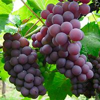 ¿Qué nos impide dar frutos?