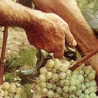 ¿Cuál es tu Viña?