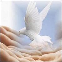 Creyendo a Jesús, confiando en Jesús, acompañando a Jesús