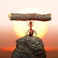 La perseverancia, un don especial